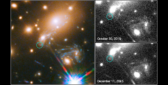This image composite shows the search for the supernova, nicknamed Refsdal, using the NASA/ESA Hubble Space Telescope.  The image to the left shows a part of the the deep field observation of the galaxy cluster MACS J1149.5+2223 from the Frontier Fields programme. The circle indicates the predicted position of the newest appearance of the supernova. To the lower right the Einstein cross event from late 2014 is visible.  The image on the top right shows observations by Hubble from October 2015, taken at the beginning of observation programme to detect the newest appearance of the supernova.  The image on the lower right shows the discovery of the Refsdal Supernova on 11 December 2015, as predicted by several different models.  Credit: NASA & ESA and P. Kelly (University of California, Berkeley)