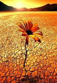 http://ib3tv.com/20120221_177757-flors-en-el-desert.html