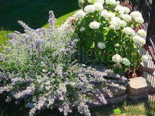 Rośliny na komary – co mieć w ogrodzie