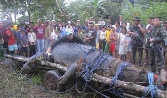 Foto del cocodrilo gigante