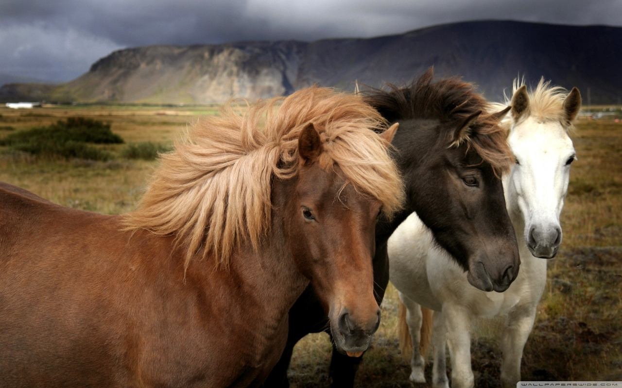 Must see   Wallpaper Horse Chromebook - Stylish+Horse+Wallpaper  Best Photo Reference_68467.jpg