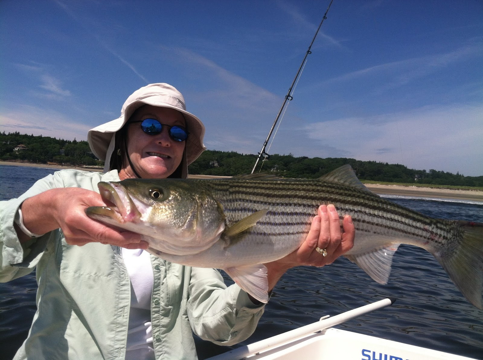 Maine striper fishing reports charters guided saltwater for Maine bass fishing