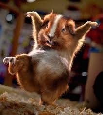 Tentang Hamster