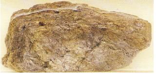 Batu apung (Sumber: Eyewitness)