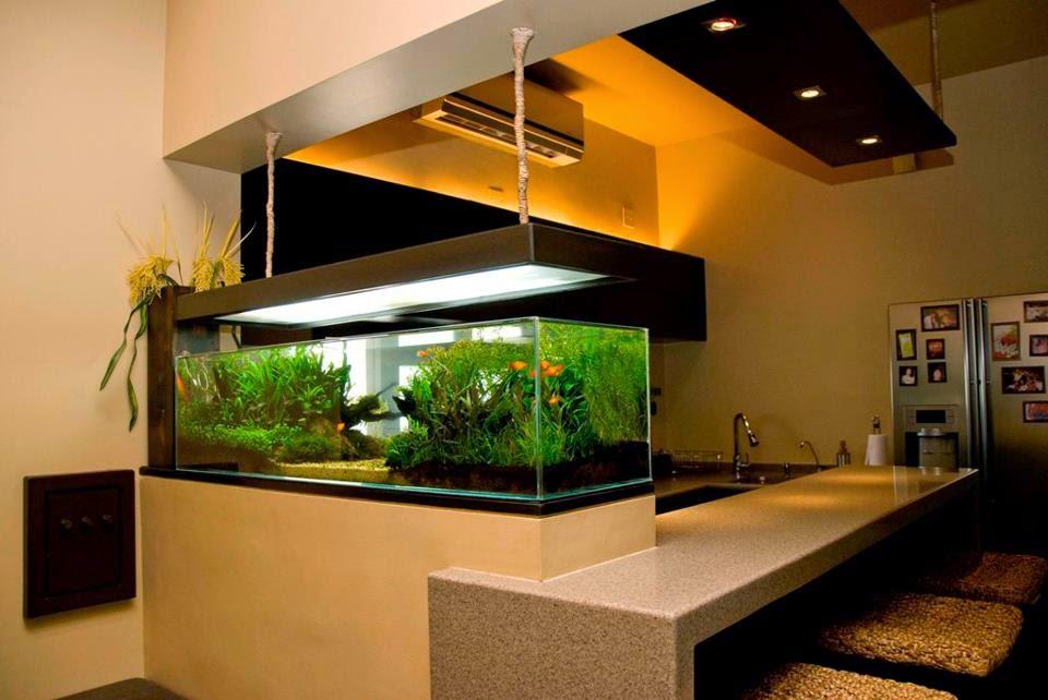 design dan model akuarium rumah dunia akuarium