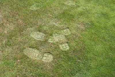 Golf course turf footprints stick in grass during extreme heat