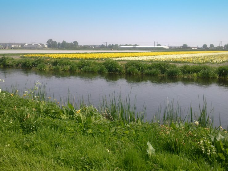 Pike Blog: Haarlem