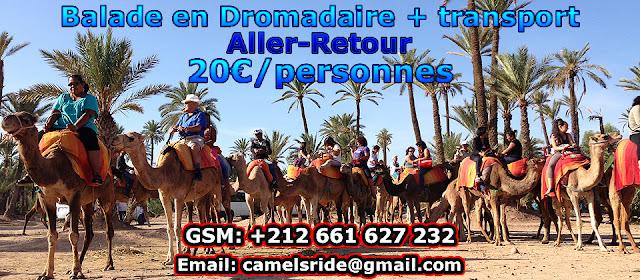 Balade Dromadaire à Marrakech