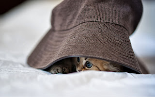 Gato en un sombrero escondido