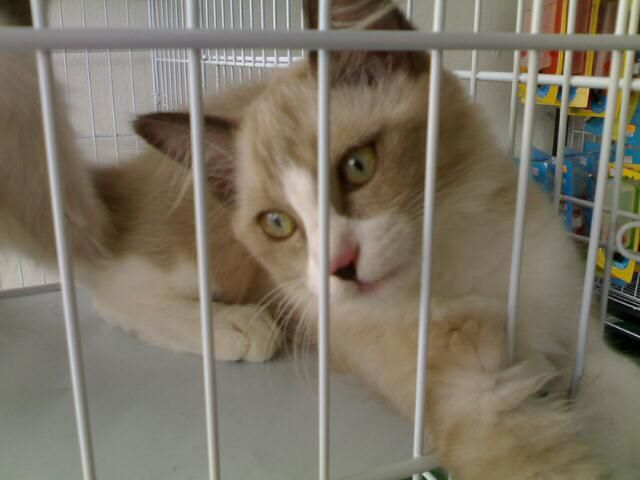 My Love And Sweet Love Berkat Sedekah Kepada Kucing