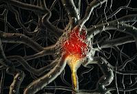 Brain Cells3