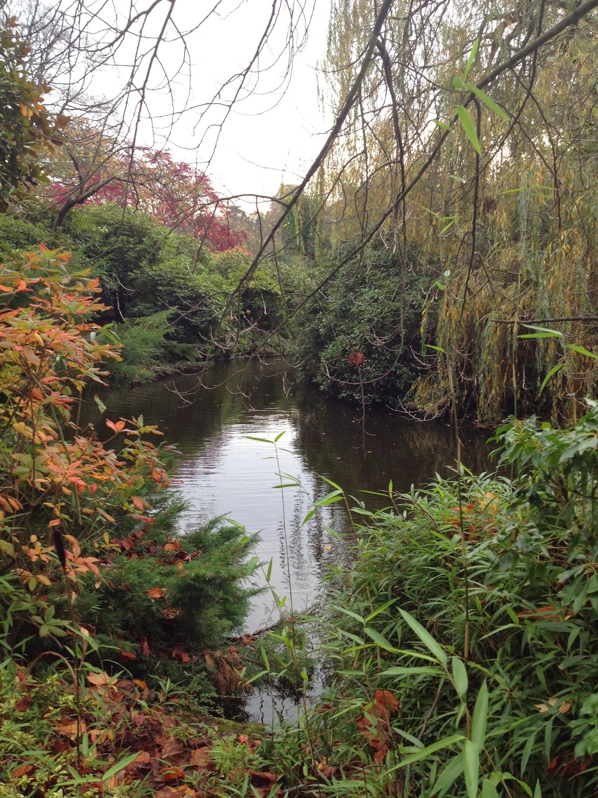 Shrewsbury Dingle in Autumn