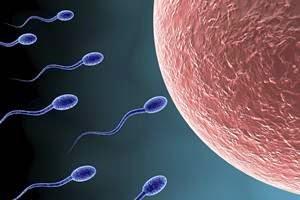 alcoolul afecteaza calitatea spermei