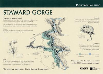 North East artist Ingrid Sylvestre Fine Line illustrations for Interpretive Panels for Staward Gorge National Trust