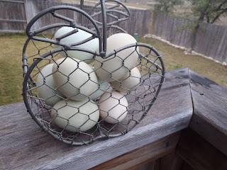 fresh ameraucana eggs