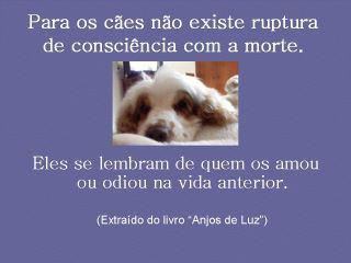 http://blog.lema.not.br/2013/01/os-animais-tem-alma/