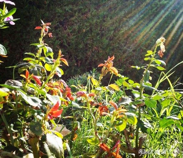 C mo se alimentan las plantas la nutrici n vegetal guia - El jardin del sol ...
