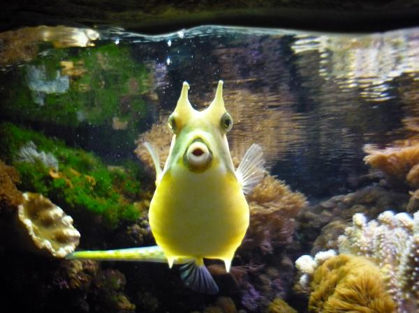 Cool pictures top hd pictures of funny fish for Funny fish pictures