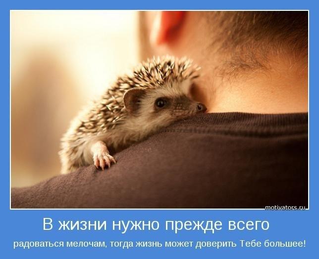 Радуйся, Ёжик, Эмоциональный застой и тревогу, Большое путешествие, Право выбора