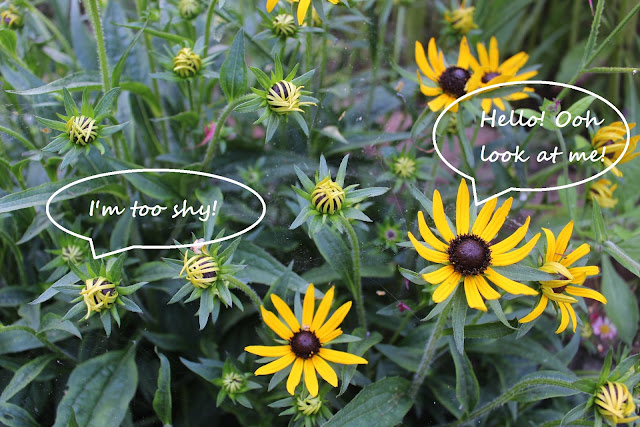 Rudbeckia with speech bubbles showing what they might be thinking