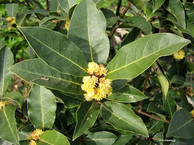 Καλλιέργεια αρωματικών φυτών