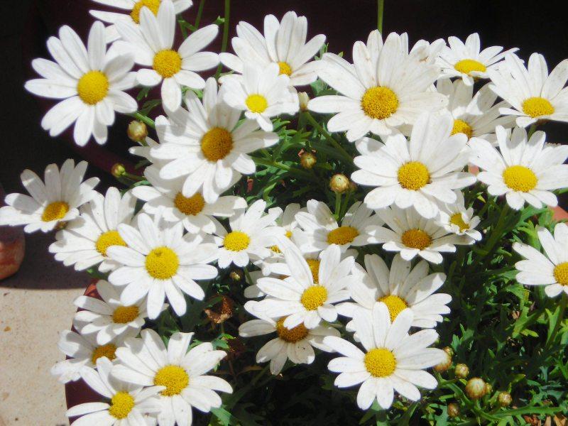 http://2.bp.blogspot.com/-sLTTIwjCT-o/Tdm1q0v3YZI/AAAAAAAADeM/1I9xlNL_eDQ/s1600/mis+margaritas+blancas.JPG