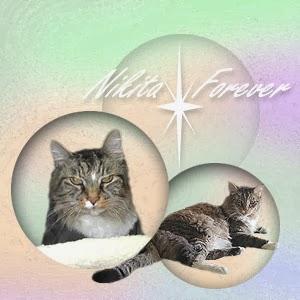 Forever, Nikita