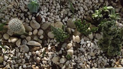 cactos, plantas suculentas, floresta de cactos