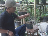 Wawan Trainer Bonsai