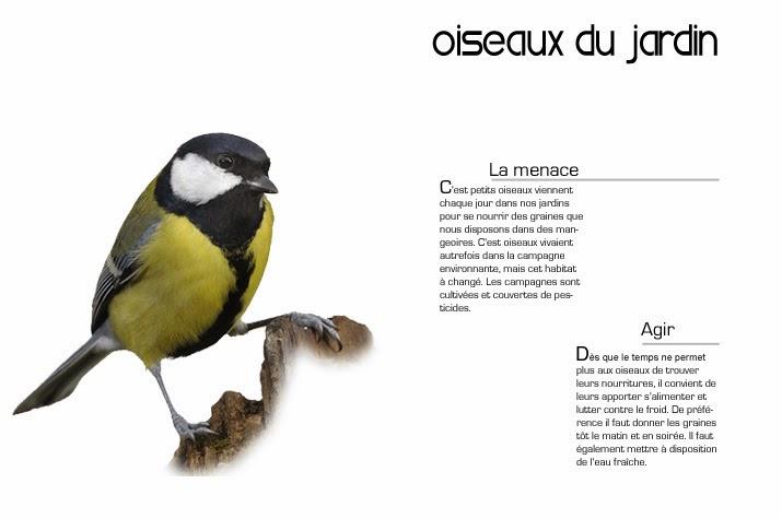 oiseaux du jardin phot 39 anim. Black Bedroom Furniture Sets. Home Design Ideas