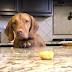 Cachorro tenta roubar comida em vídeo e faz malabares