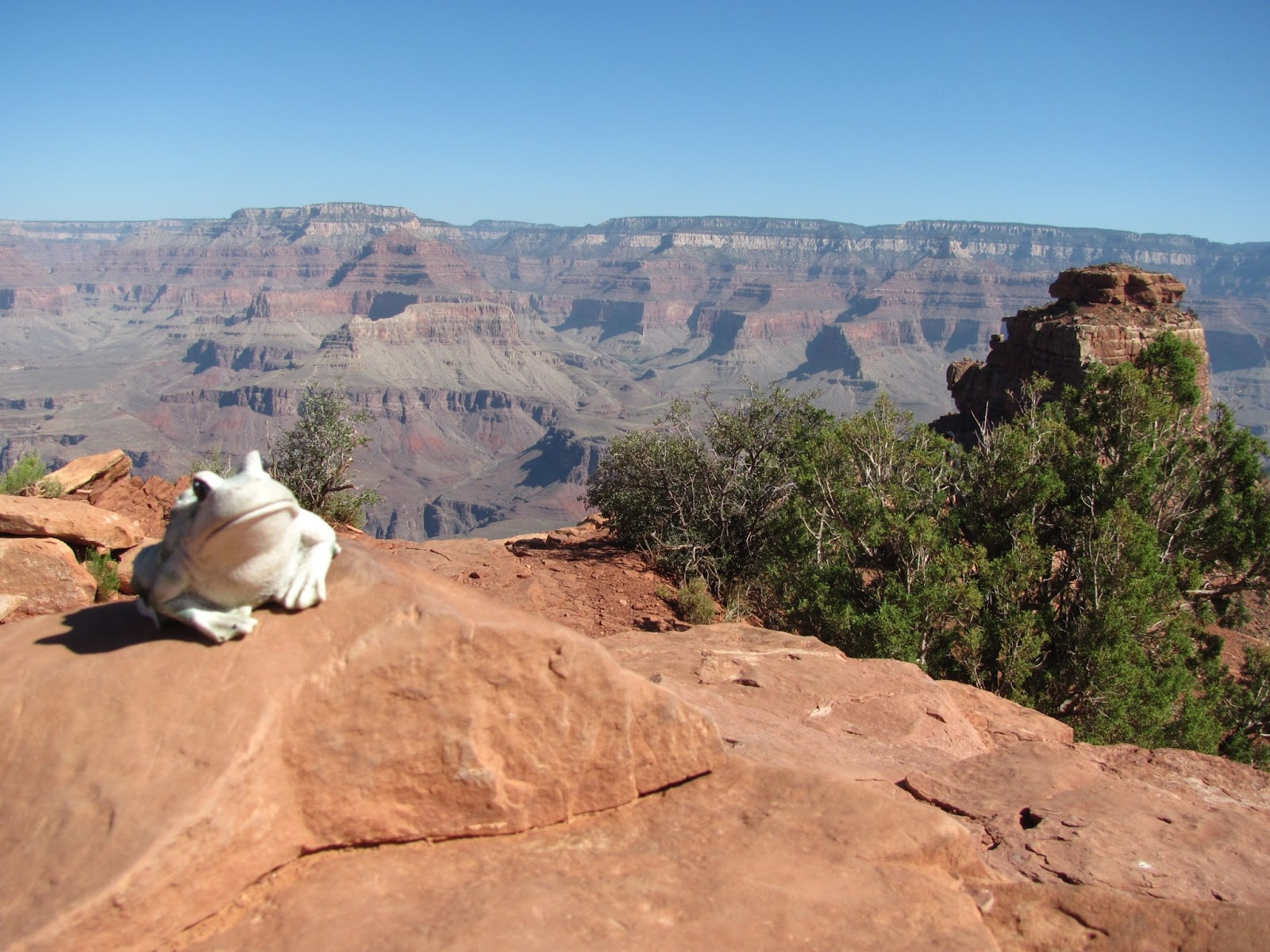 Frog sits on the edge of the canyon at Grand Canyon National Park, Arizona