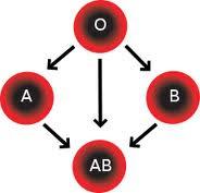 Ομάδα αίματος και διατροφή