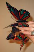 Mariposas pintadas