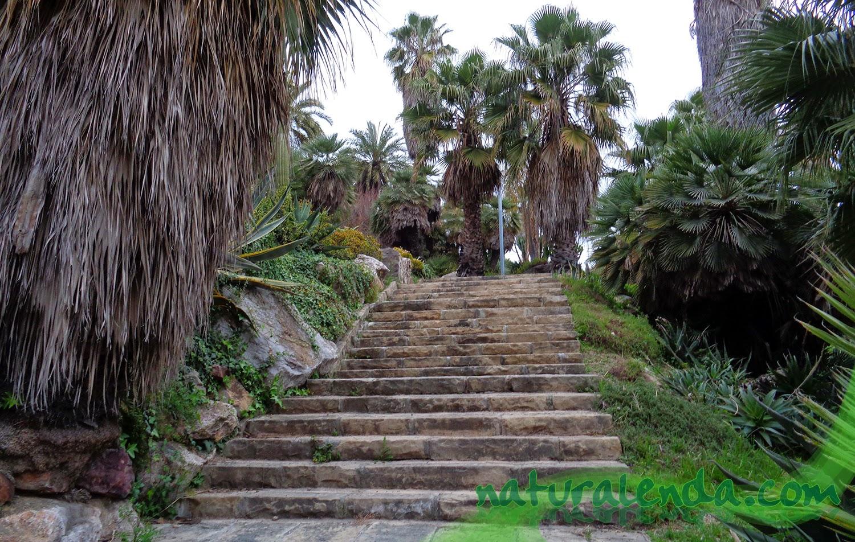 escaleras por el palmeral