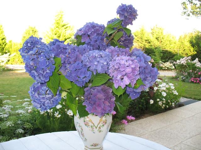 Roses du jardin ch neland bouquet d 39 hortensias - Terre pour hortensia bleu ...