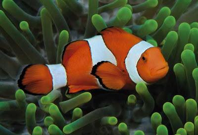 Bagaimanan Ikan tidur