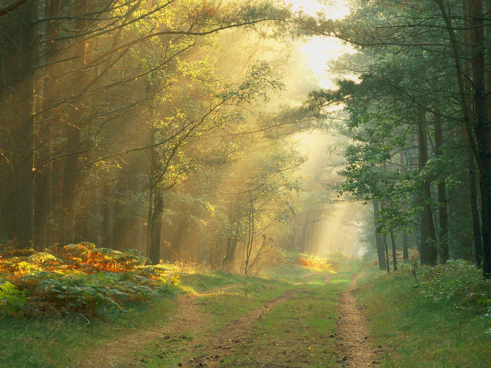 http://2.bp.blogspot.com/-sNUr78tLev4/TWFzdvkAW-I/AAAAAAAAA0I/pzzgzYGly90/s1600/sun-rays-wallpaper.jpg