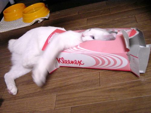 kucing kelakar comel gila
