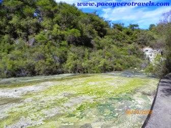 Wai O Tapu, Lady Knox geyser y Champagne Pool Rotorua
