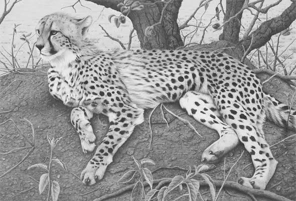 чёрно-белые рисунки животных