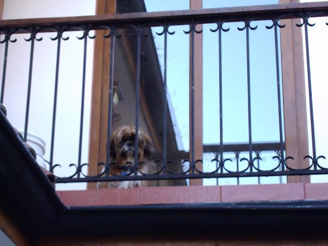 Tofien un balcon