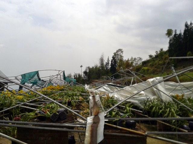 toofan destroyed mungpoo cymbidium orchid park