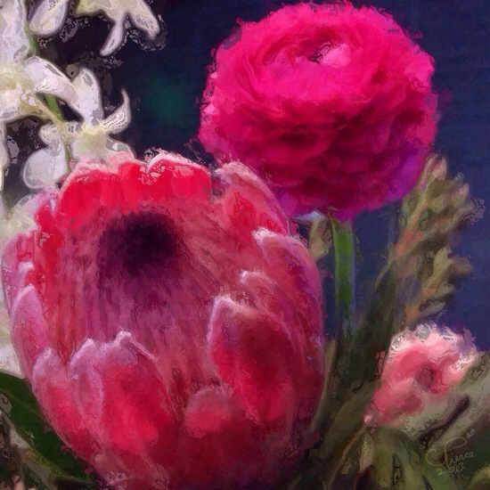 Protea and Ranunculus © Christianna Pierce