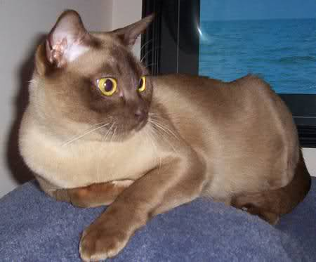 Cats Eyes Blogspot Rar  Duke Of Burgundy