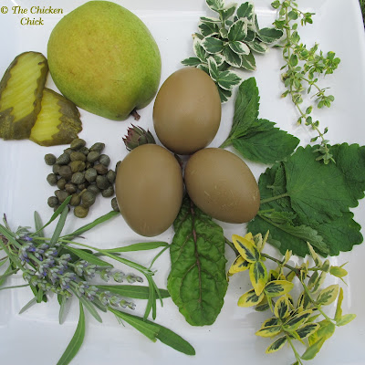 Chicken eggs- olive green eggshells are brown plus blue and are white inside