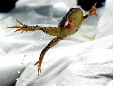 Frog Hopping