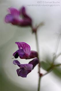 photo de fleur macro artistique cercle de lumière flare photo créative printemps ombre rayon du soleil