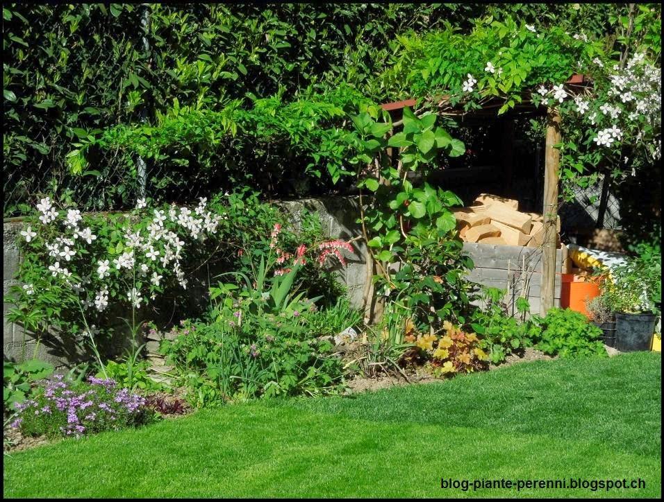Top Un giardino di perenni in Ticino KN43