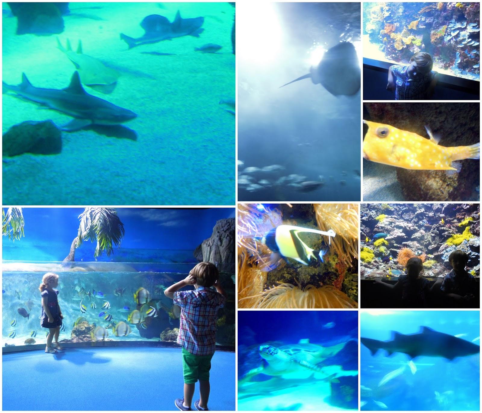 Asturias con niños: Durmiendo con tiburones en el Acuario